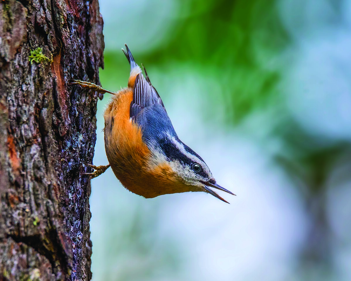 It's Time to Try Birding Beyond the Backyard