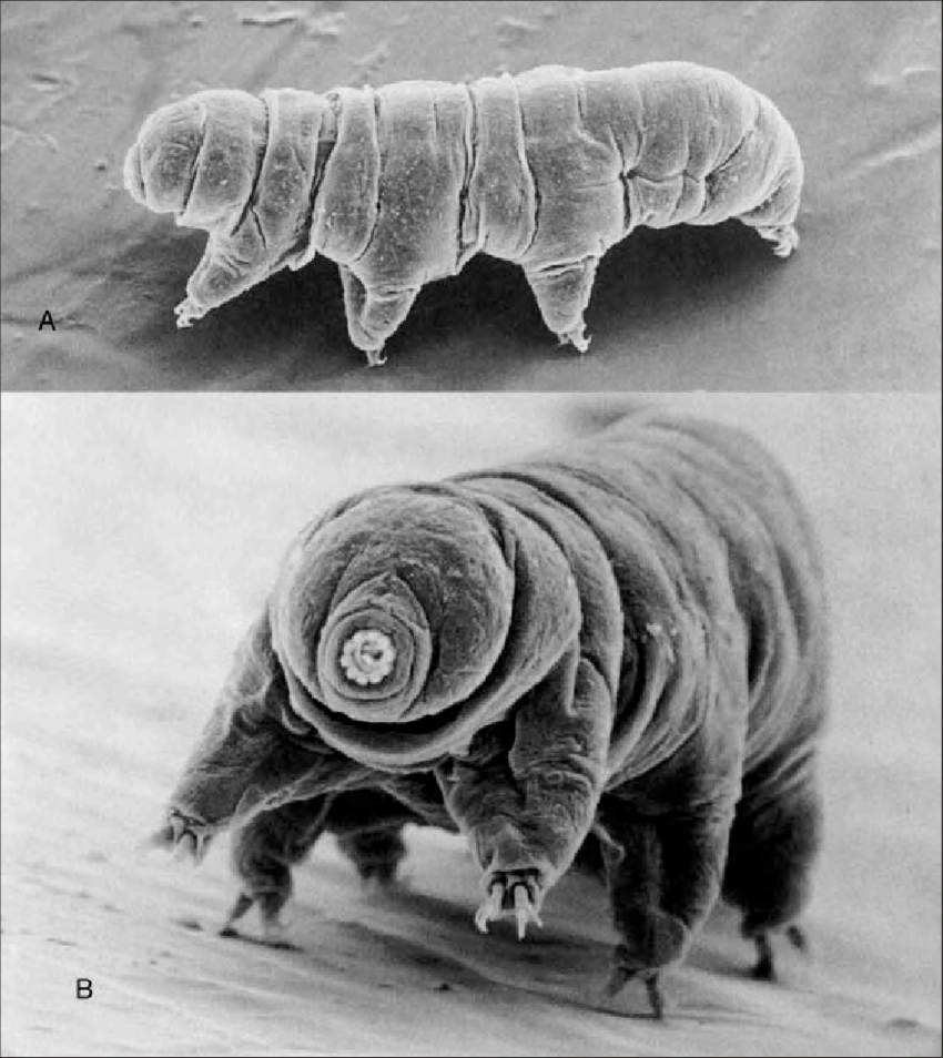 Park Leads the World in Science of 'Water Bears'