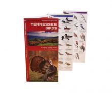 A Pocket Naturalist Guide - Tennessee Birds