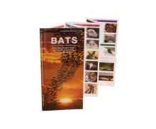Bats Pocket Guide