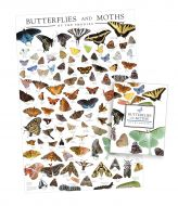 Butterflies and Moths Bundle Gift Set