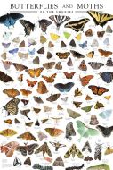 Butterflies and Moths of the Smokies Poster