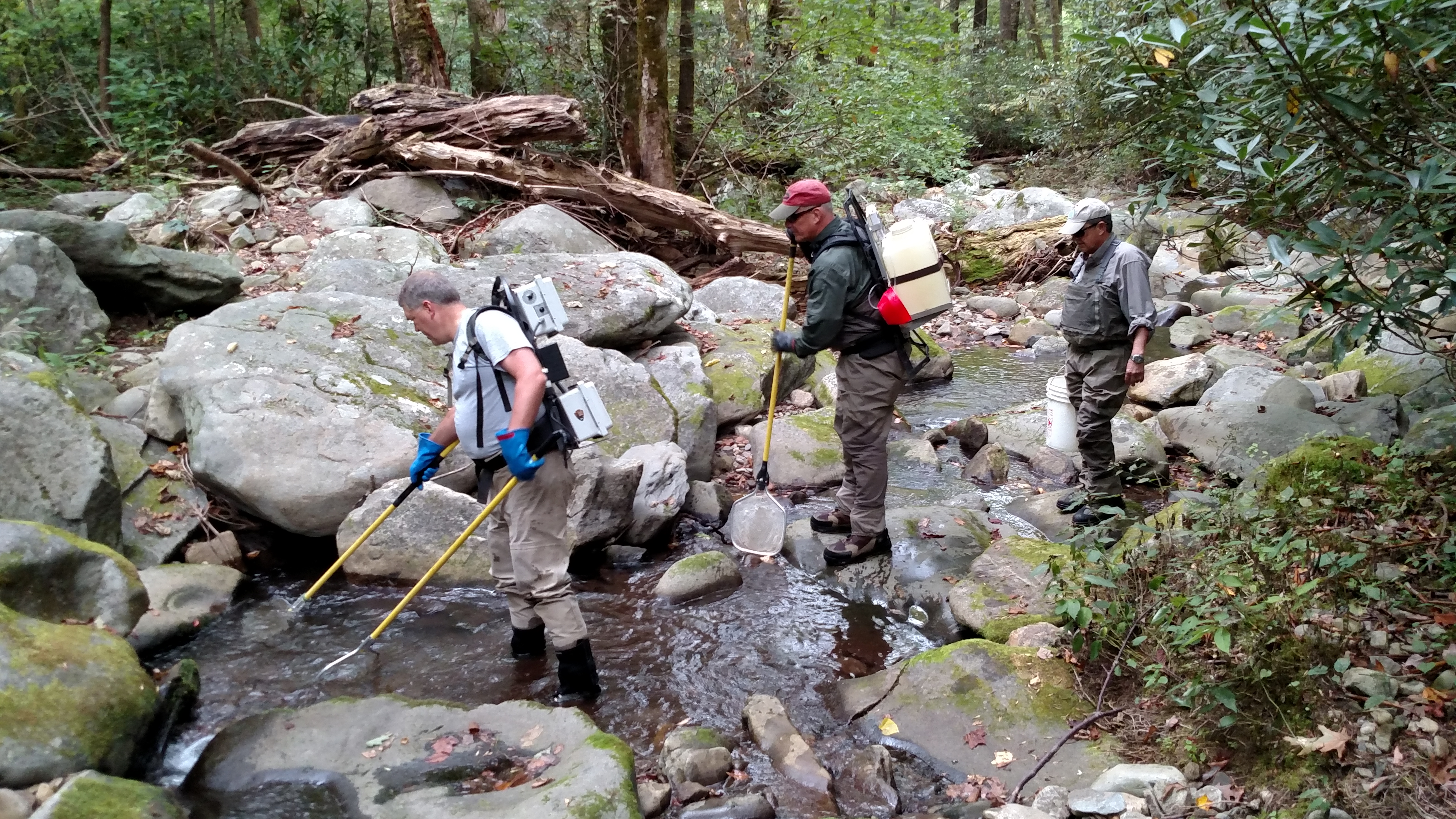 Matt Kulp, supervisory fishery biologist for GSMNP, leads a team of Trout Unlimited volunteers collecting brook trout in Cosby Creek stream habitat to move into the newly restored section of Lynn Camp Prong. Photo courtesy of NPS.