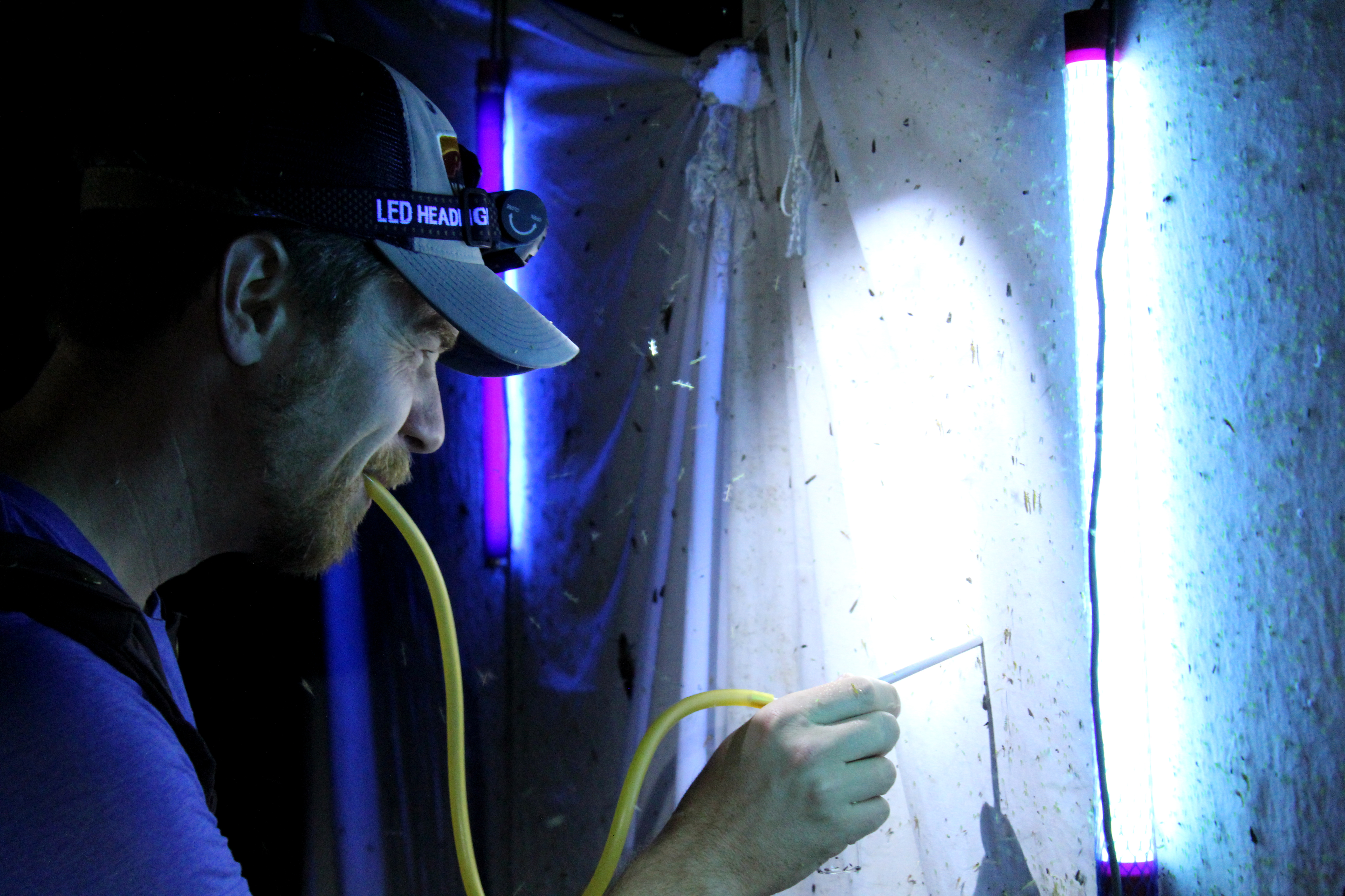 DLiA Science Director Will Kuhn collects insects at a UV light trap at Abrams Creek. Photo courtesy of Xavier Reyes.