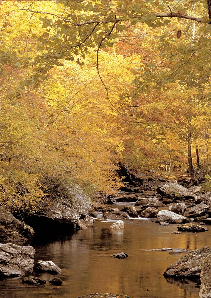 Golden autumn leaves reflect on a calm Smoky Mountain stream. Photo courtesy of NPS.