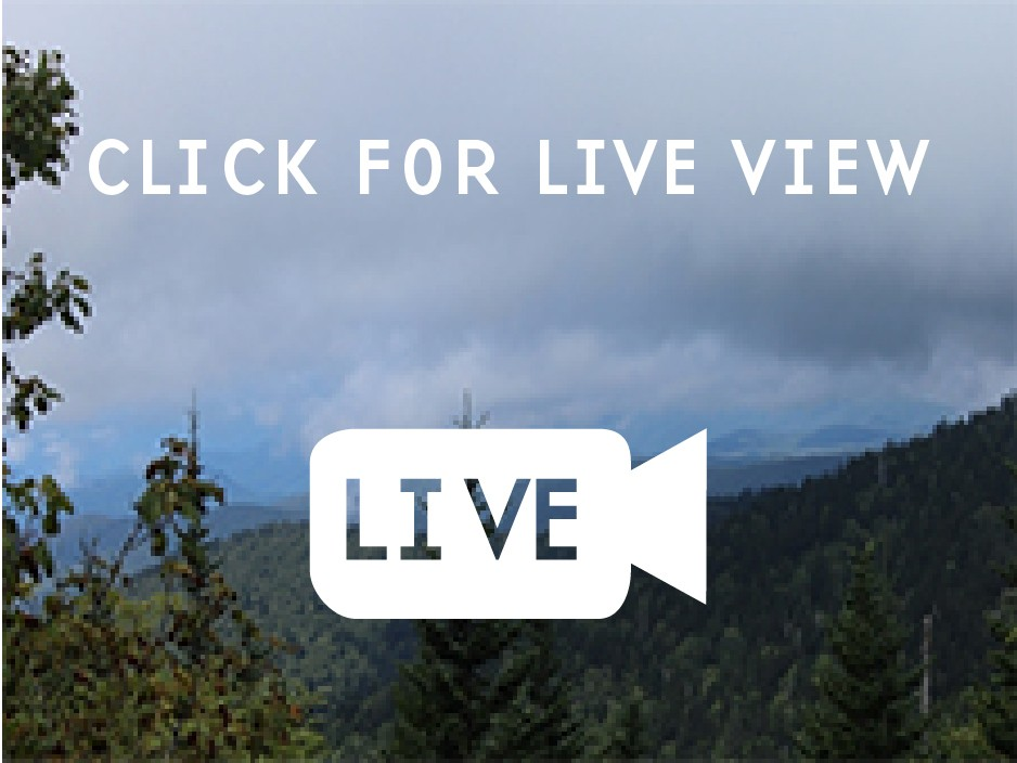 The view from the Clingmans Dome webcam.