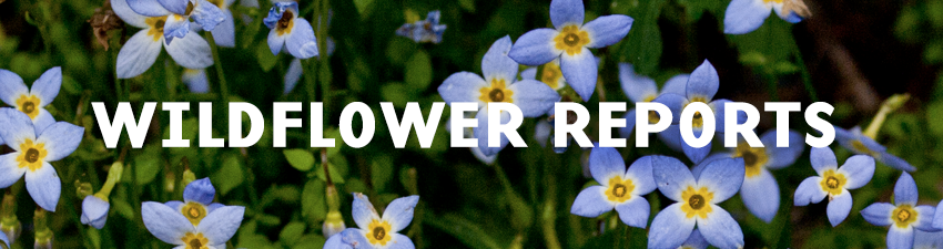 Wildflower Reports Banner
