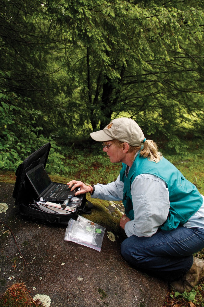 Biologist Lynn Faust collecting temperature data to determine the firefly mating ritual peak